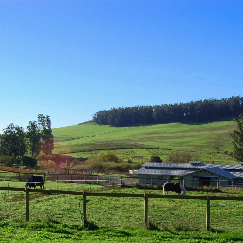 15 acre horse boarding facility in Petaluma